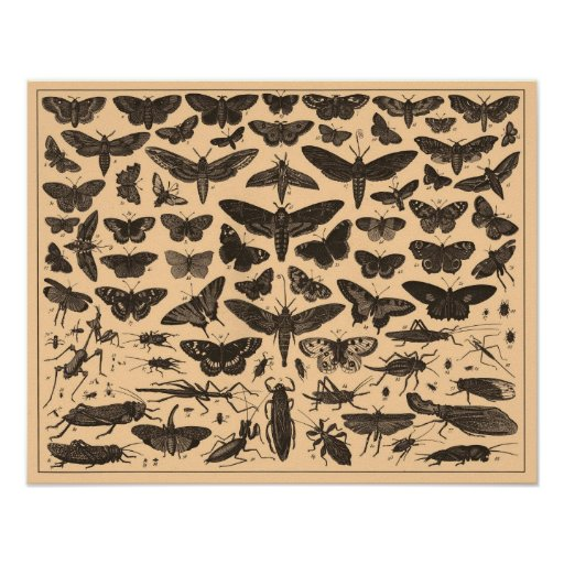 Vintage Insects Poster