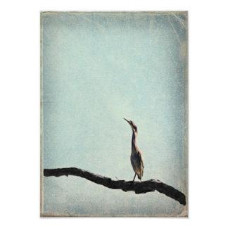 Vintage Inspired Green Heron on Pale Blue Sky Photo Art