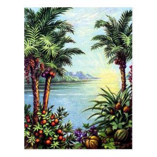 Vintage Island Postcard