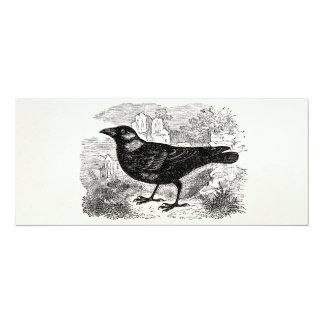 Vintage Jackdaw Crow Bird Personalized Birds Crows Card