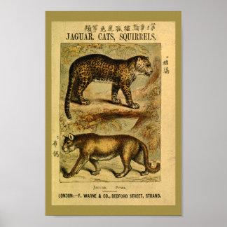 Vintage Jaguar Puma Cat Natural History Print