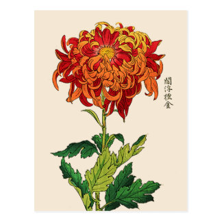 Vintage Japanese Chrysanthemum. Rust and Orange Postcard