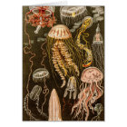 Vintage Jellyfish Antique Jelly Fish Illustration Card