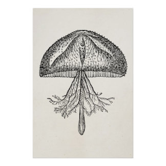 Vintage Jellyfish Antique Jellyfishes Template Poster