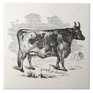 f2efd8a51a2 Vintage Kerry Cow Personalized Bull Illustration Tile