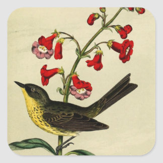 Vintage Kirtlands Warbler Bird Square Sticker
