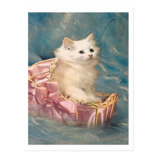 Vintage Kitty Postcard