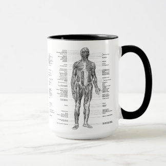 Vintage - Labeled Human Anatomy Muscles