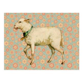 Vintage Lamb Art Postcard