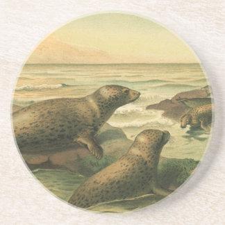Vintage Leopard Seals, Marine Life Aquatic Animals Drink Coasters
