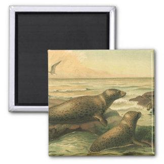 Vintage Leopard Seals, Marine Life Mammals Animals Refrigerator Magnets