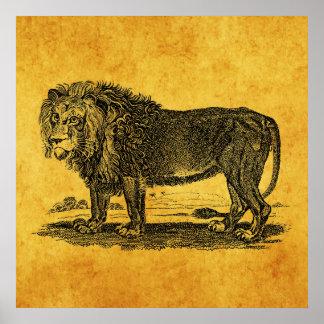 Vintage Lion Illustration -1800's African Animal Poster