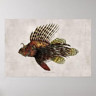 Vintage Lionfish Posters