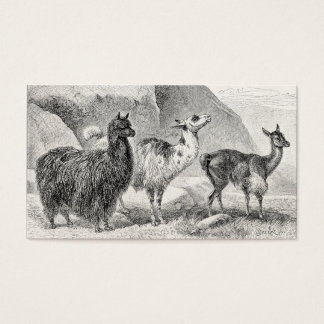 Vintage Llama Alpaca Template Llamas Alpacas Business Card