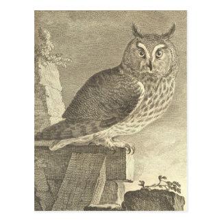 Vintage  Long Eared Owl Postcard