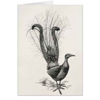 Vintage Lyre Bird Lyrebird Illustration Template Note Card