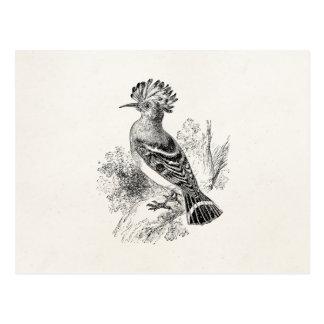 Vintage Madagascar Hoopoe Bird Personalized Birds Postcard