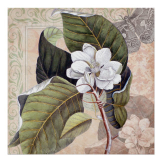 Vintage Magnolia Blossom Shabby Elegance Poster