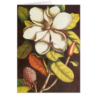 Vintage Magnolia Flowers Plant With Seeds Card