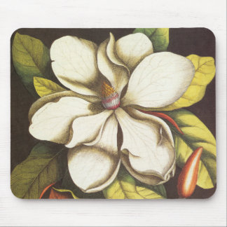 Vintage Magnolia Flowers Plant With Seeds Mouse Pad