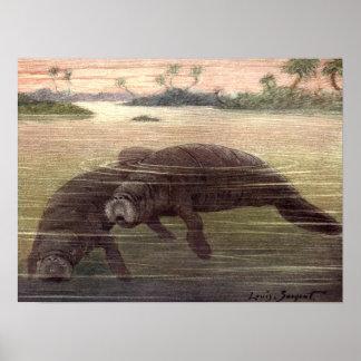 Vintage Manatees or Sea Cows, Marine Mammals Poster