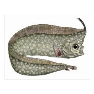 Vintage Marine Aquatic Life, Crested Oarfish, Fish Post Cards