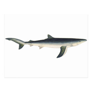 Vintage Marine Aquatic Ocean Life, Blue Shark Post Cards