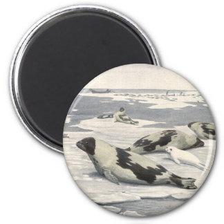 Vintage Marine Life Mammals Harp Seals Snow Arctic Refrigerator Magnet