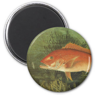 Vintage Marine Life, Red Snapper Fish in the Ocean Magnets