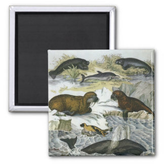 Vintage Marine Mammals; Whales, Walruses and Seals Refrigerator Magnet
