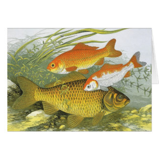 Vintage Marine Sea Life Fish, Aquatic Goldfish Koi Greeting Card