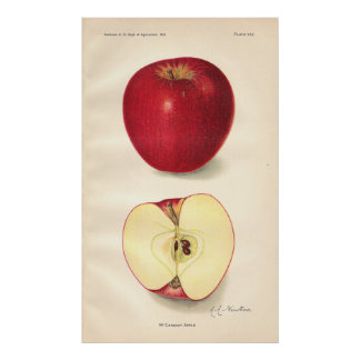Vintage McCroskey Apple Poster