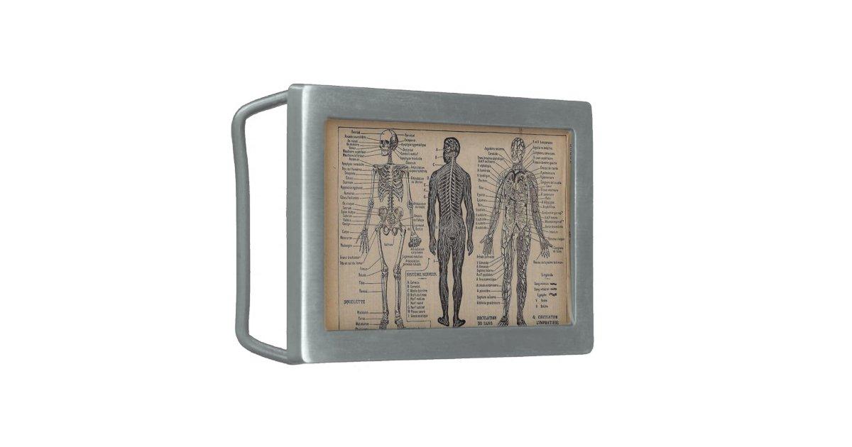 Vintage Medical Anatomy Diagram Belt Buckle