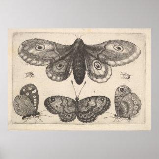 Vintage Moth Butterflies Lepidoptera Print (57)