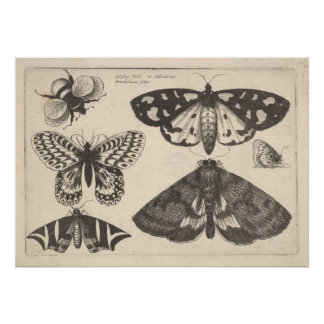 Vintage Moth Butterfly Bee Insect Art Print (65)