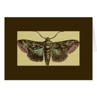 Vintage Moth Greeting Card