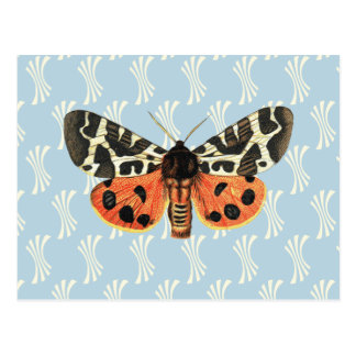 Vintage Moth Illustration Pop Art Postcard