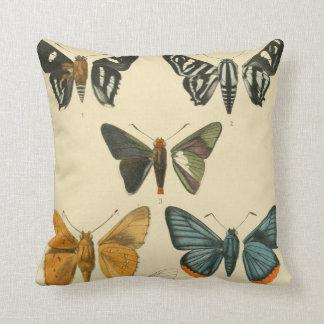 Vintage Moth Illustrations Cushion