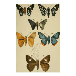 Vintage Moth Illustrations Poster