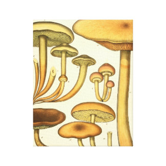 Vintage Mushrooms Brown Green French Art Print