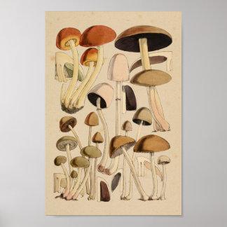 Vintage Mushrooms Varieties Green Brown Art Print