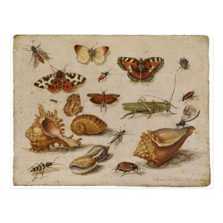 Vintage Nature Postcard