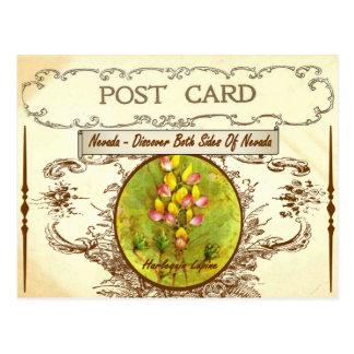 Vintage Nevada State Flower Postcard