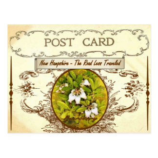 Vintage New Hampshire State Flower Postcard
