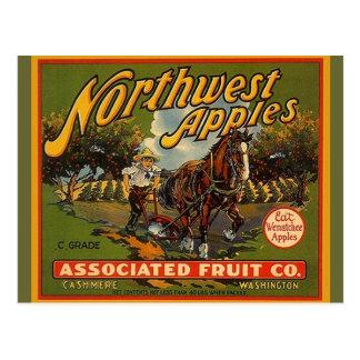 Vintage Northwest WA Apples Draught   Horse Postcard