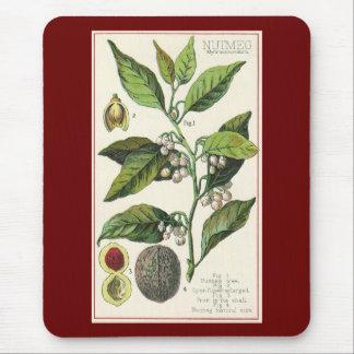 Vintage Nutmeg Plant Fruit Seeds, Food Herbs Spice Mouse Pad