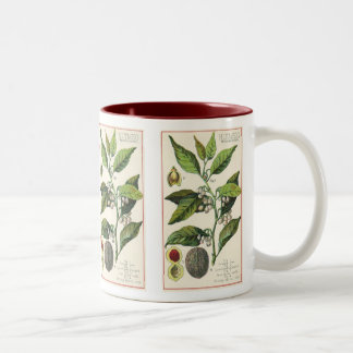 Vintage Nutmeg Plant Fruit Seeds, Food Herbs Spice Two-Tone Coffee Mug