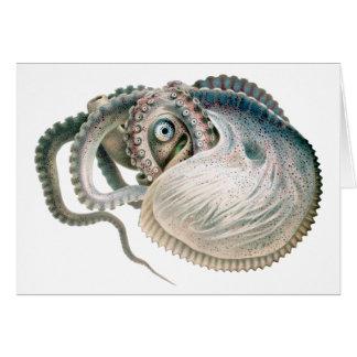 Vintage Octopus Argonaut, Marine Life Animals Card