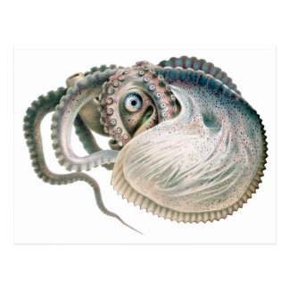 Vintage Octopus Argonaut, Marine Life Animals Postcard