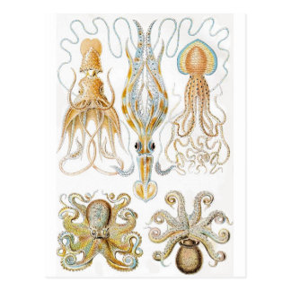 Vintage Octopus Illustration Postcard